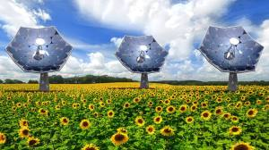 size_810_16_9_solar-sunflower