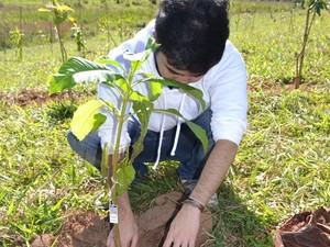 plantio-mudas-rakau_corte_ok