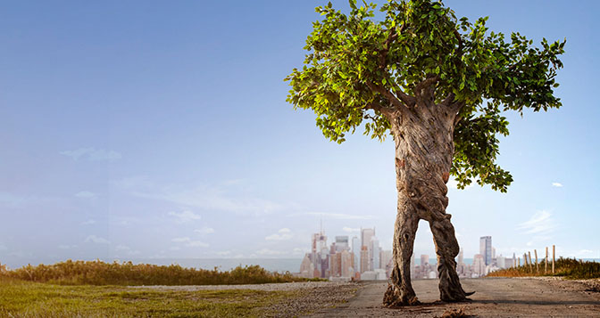 árvore sustentabilidade futuro