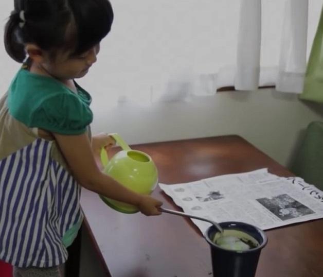 jornal-plantacao