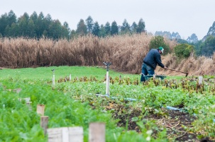 solo-agricultura-canguiri-fazenda