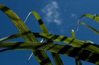 biocombustivel-brasil